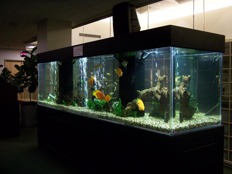 Photos Large Freshwater Aquariums