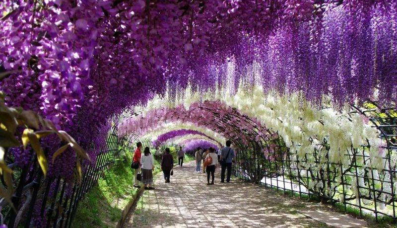 how to get to kawachi fuji garden from osaka