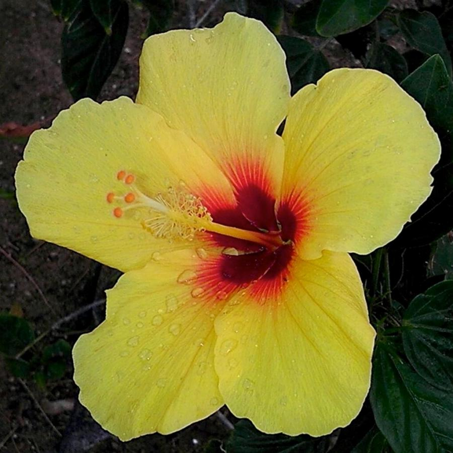 Photos And Names Of Hawaiian Flowers