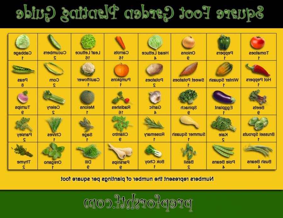 Garden Plant Guide Photo