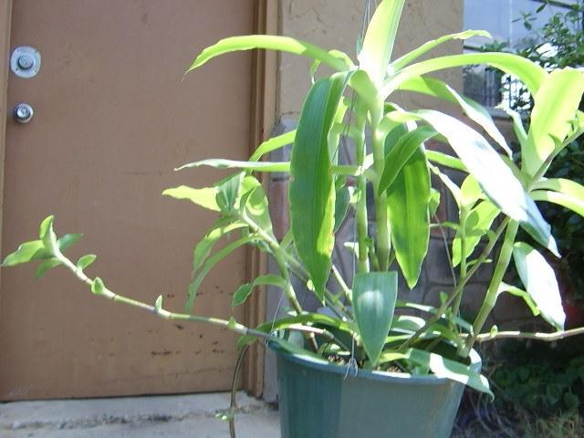 867d2e655ac04e4b568a9f2b320ddc3f Unusual Non Flowering House Plant on unusual ferns, unusual tropical house plants, unusual roses, unusual indoor house plants, unusual perennials, unusual trees,