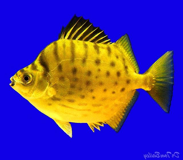 Aquarium fish photos and names for Where to buy fish online