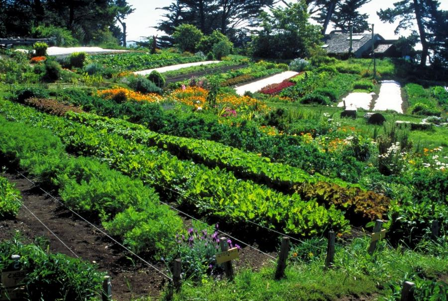 Permaculture garden photos for Small permaculture garden designs