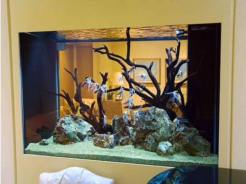 Fish photo decoration for Cool fish tank themes