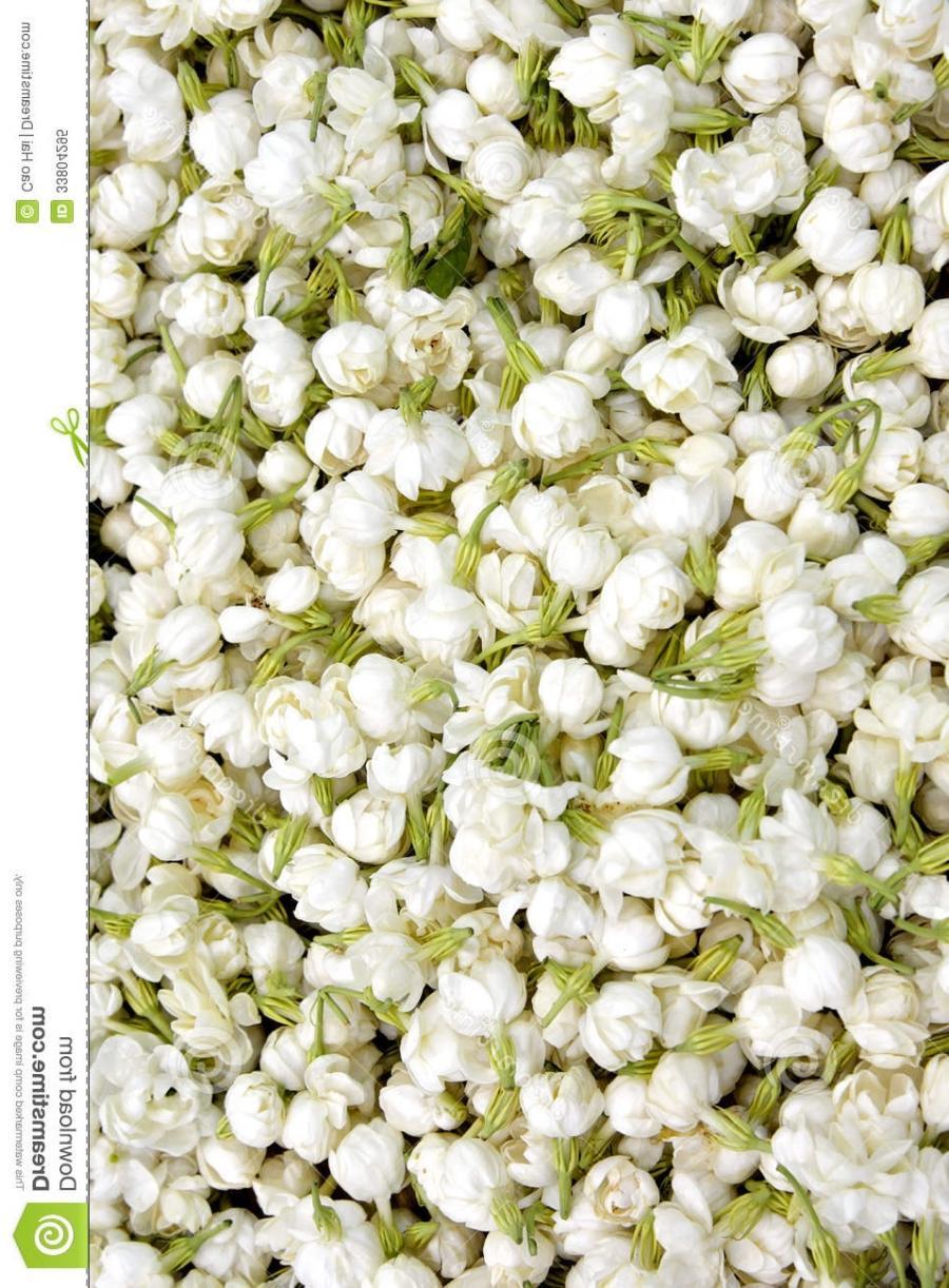 Photo of jasmine flower 110 x 150 pattern of jasmine flower izmirmasajfo