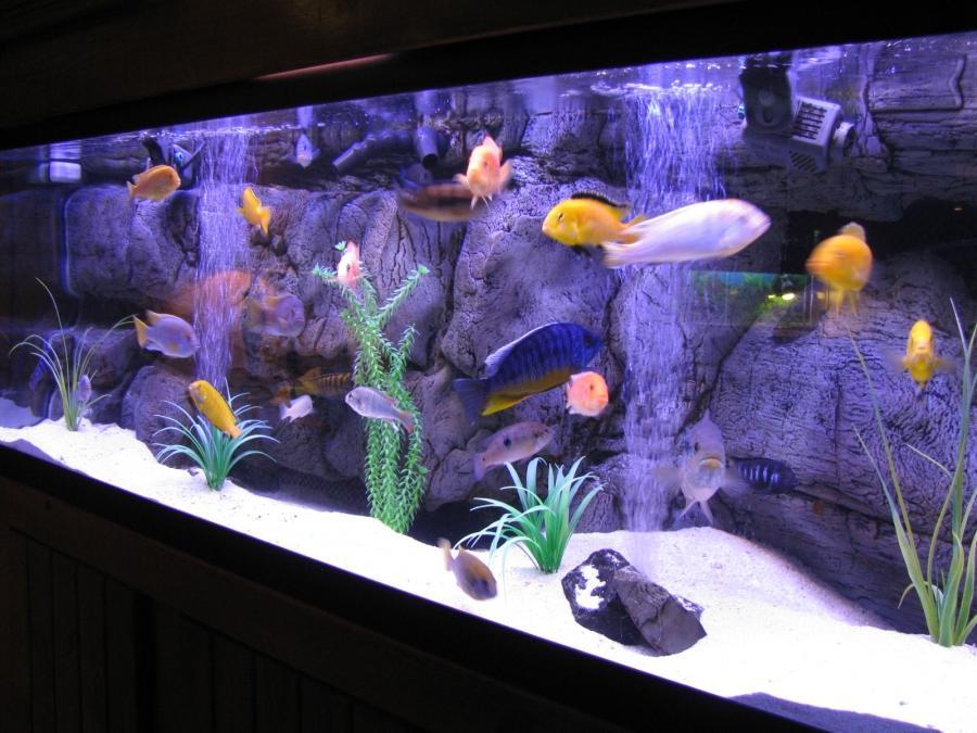 Tropical fish tank maintenance beginners guide 2017 fish for Best fish tanks for beginners