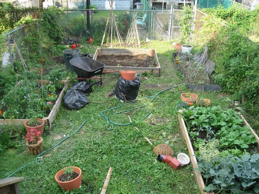 How To Start A Garden In Your Backyard 28 Images Starting A Home Vegetable Garden Garden