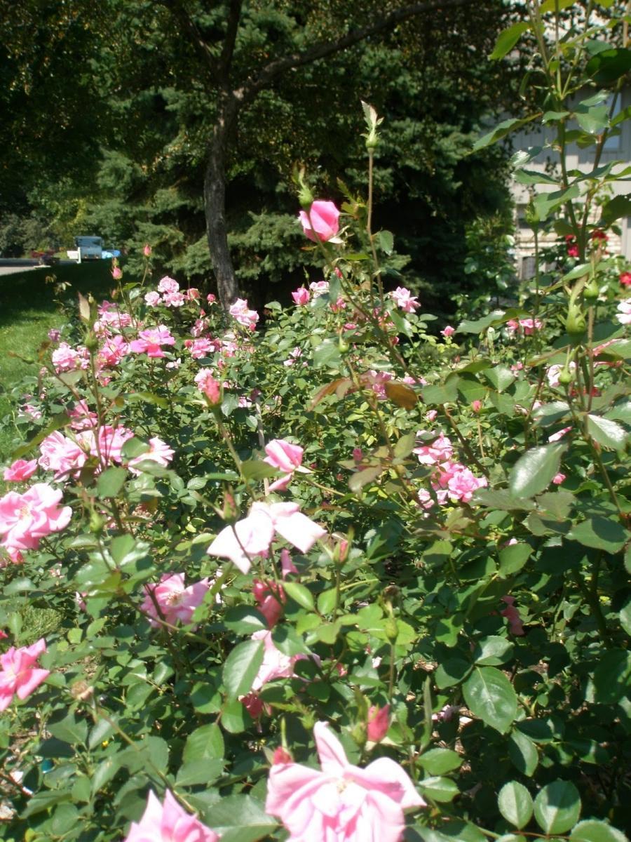 Rose Garden Song Photos