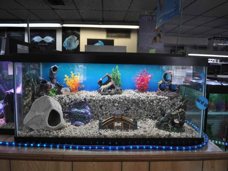 Photos aquarium decor for Aquarium decoration ideas cheap