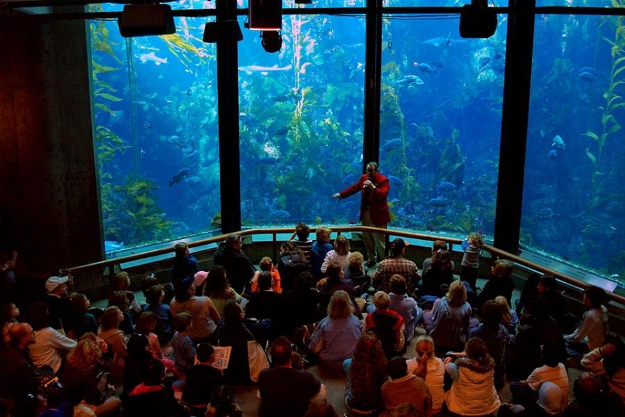 Monterey Bay Aquarium Photos
