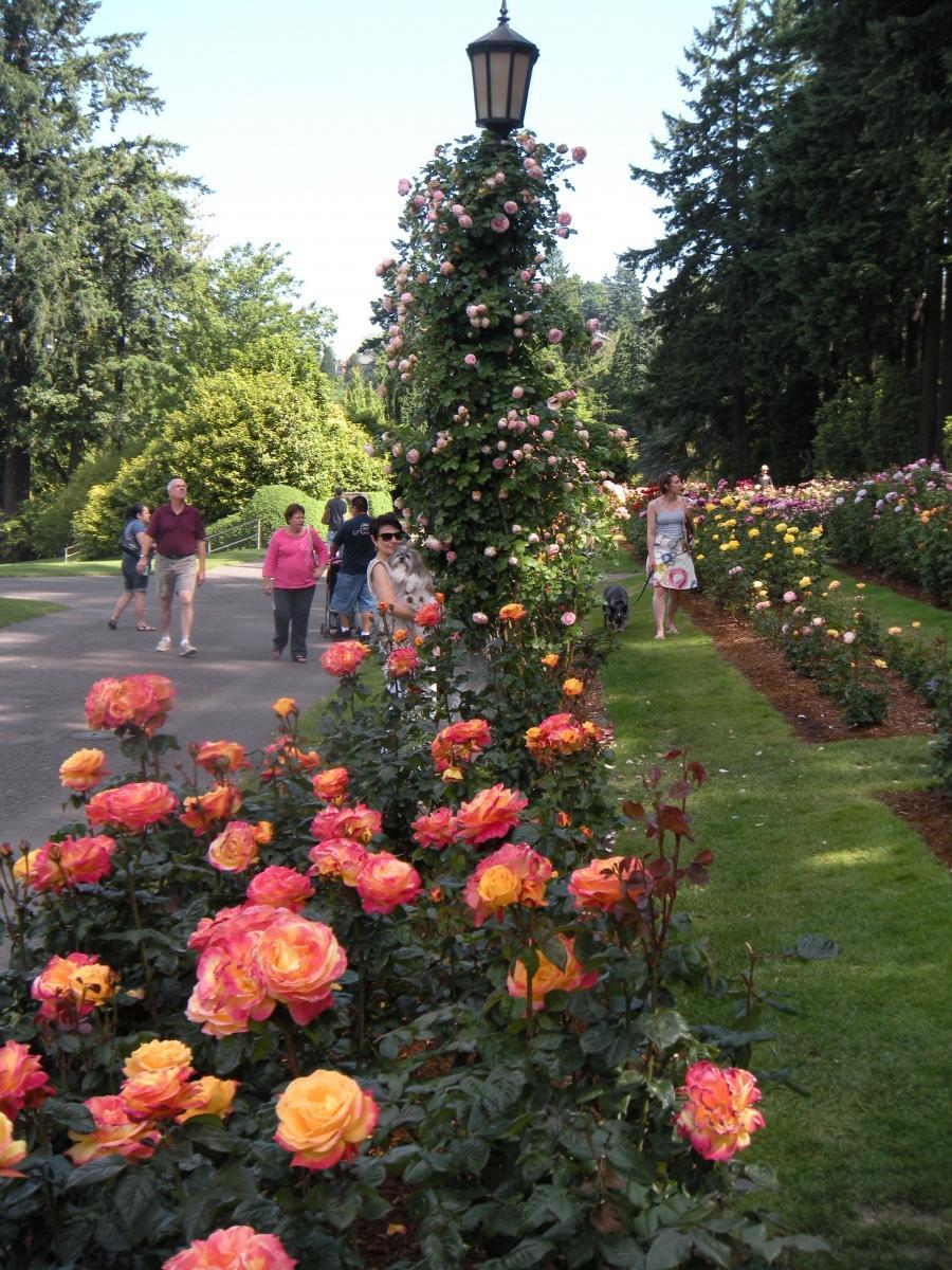 Photos Rose Gardens
