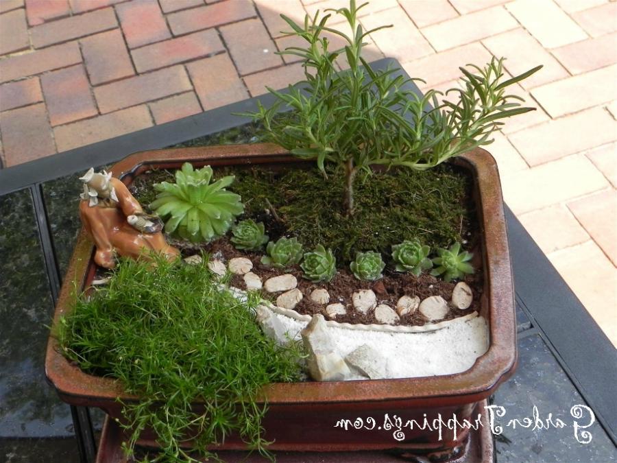 Photos of zen gardens for Mini zen garden design ideas