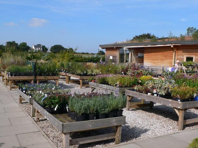 Case 2 hogsmeadow garden centre