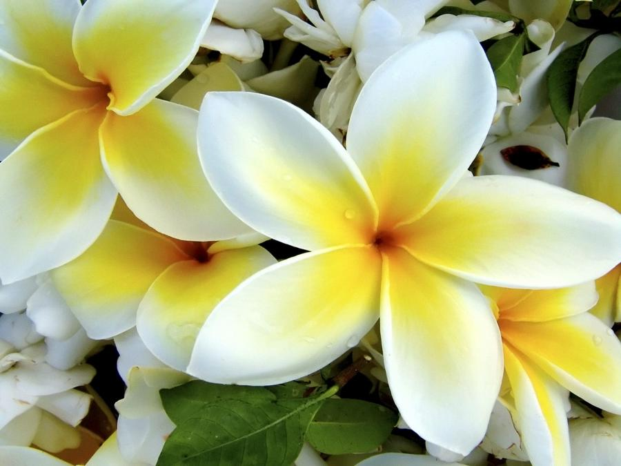 great tropical flowers image