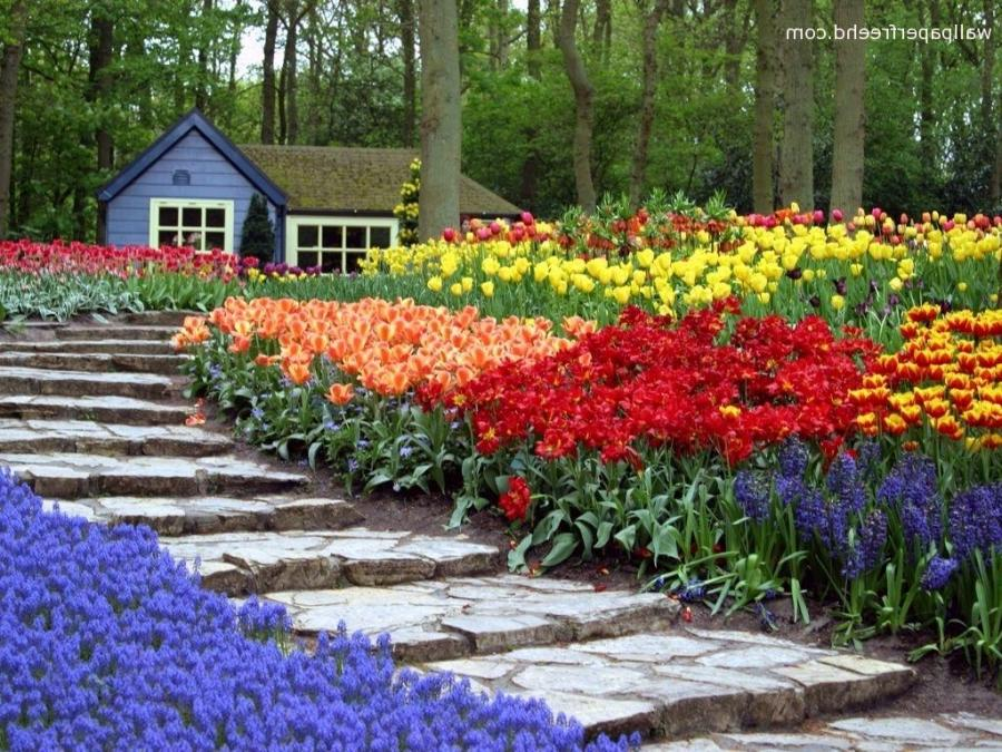 Photos Of Flower Gardens