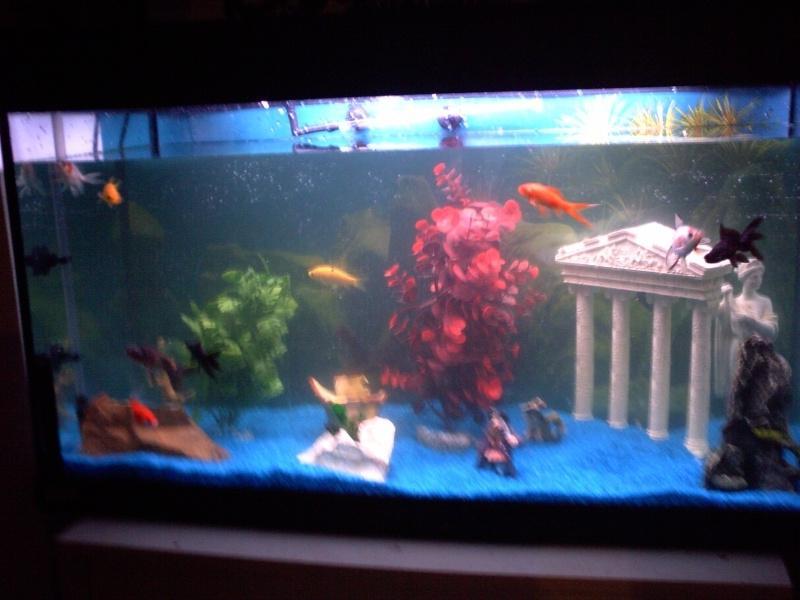 Photo de vos aquarium for Aquarium eau chaude