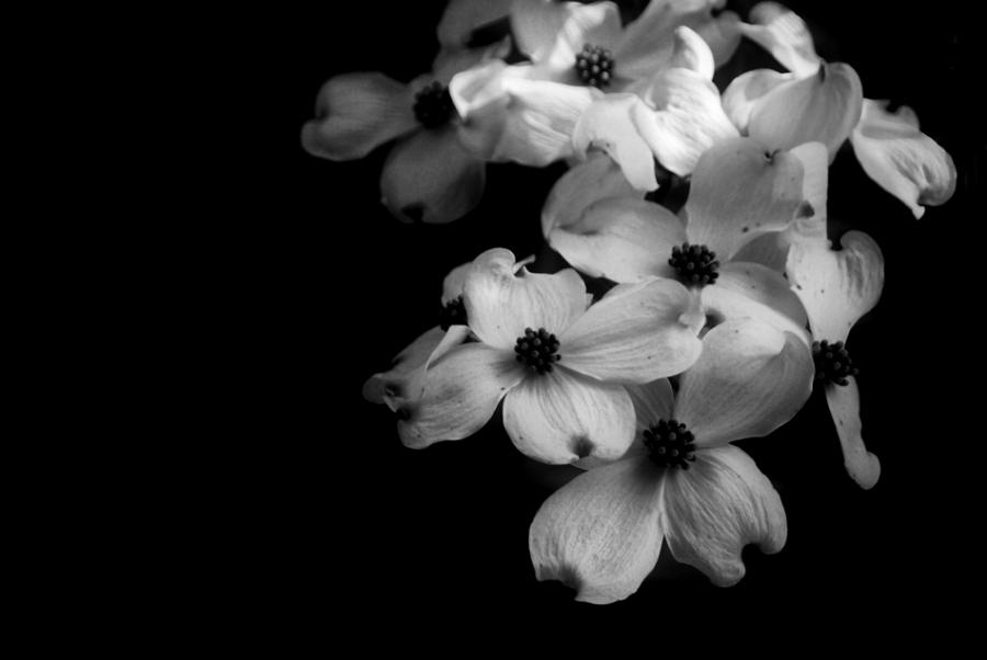 awesome black and white photos flowers
