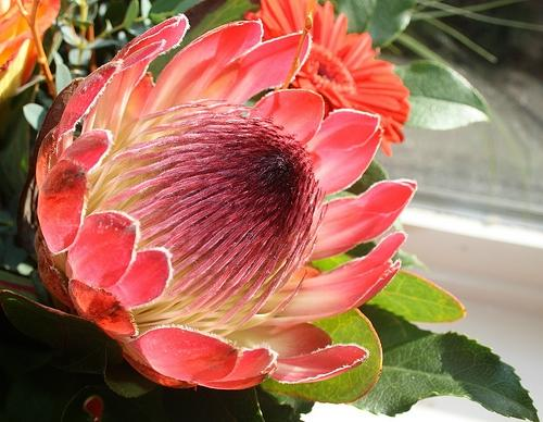 Photos And Names Of Hawaiian Flowers