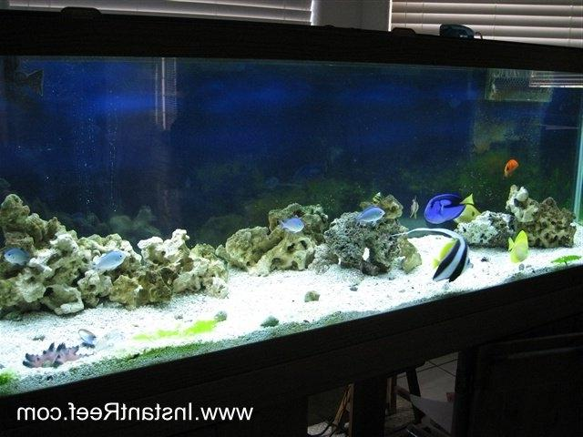 How to convert a 120 Gallon Saltwater Aquarium into an Artificial...