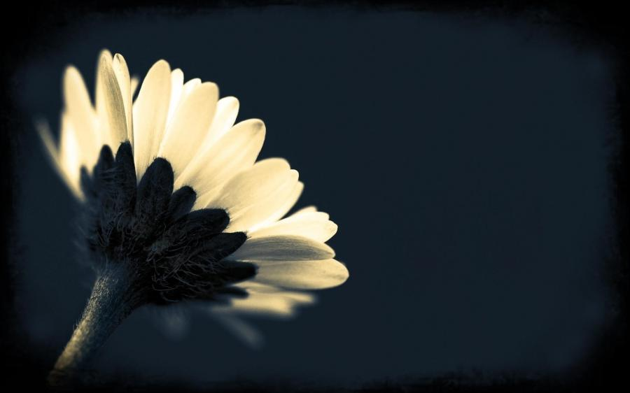 Macro Flower Photography Black Background