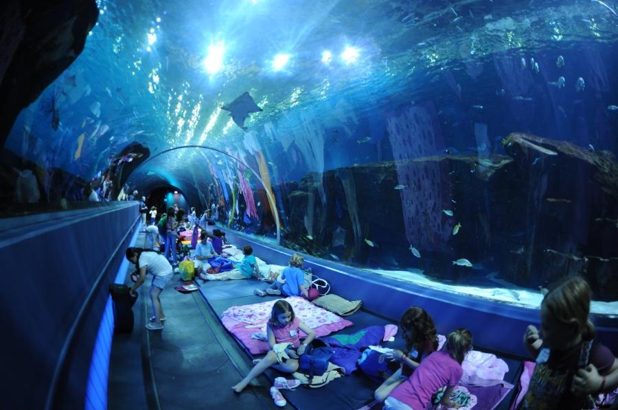Georgia Aquarium Photo Shoot