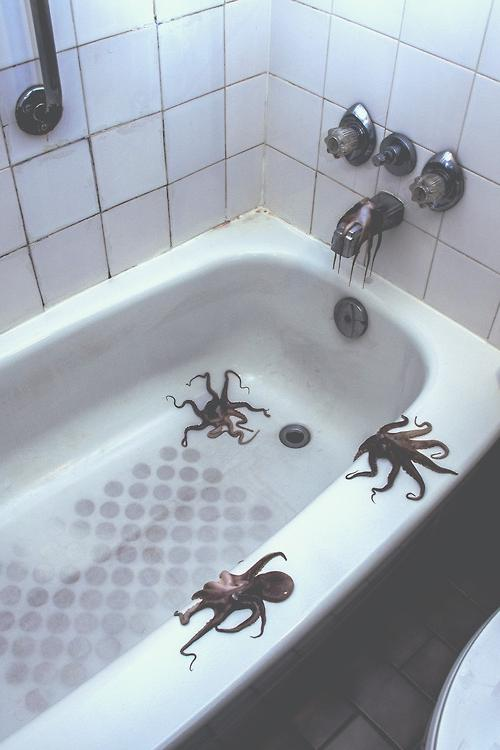 photography photo indie Grunge Octopus bathroom tub octopi