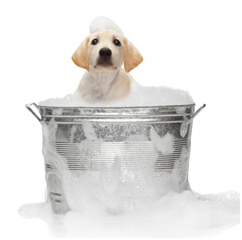 Dog Grooming Schools In Houston Home Interior Design Trends