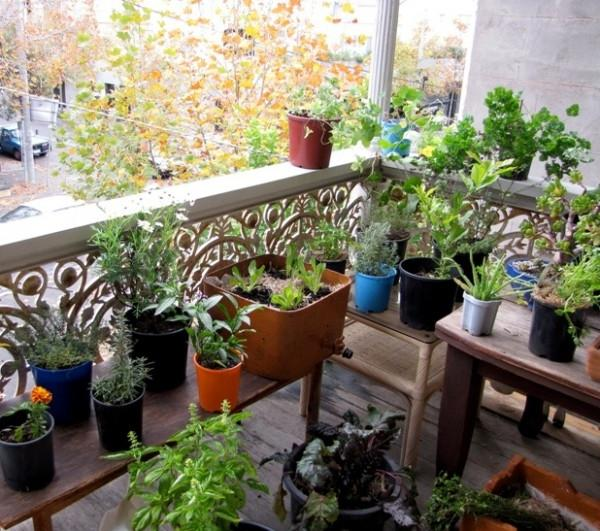Eat Your Balcony: an Edible Gardening Event with the Port Phillip...