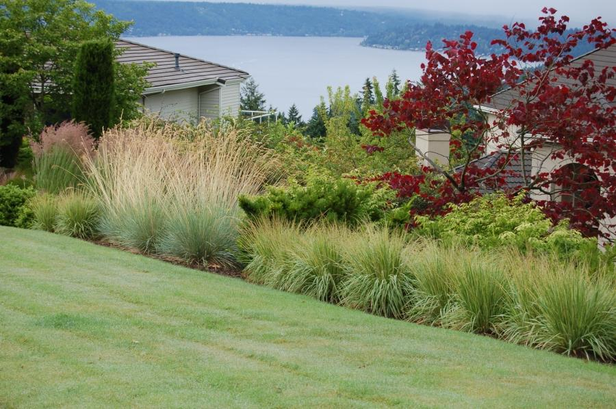 Photos of ornamental grass gardens for Ornamental grasses design plans