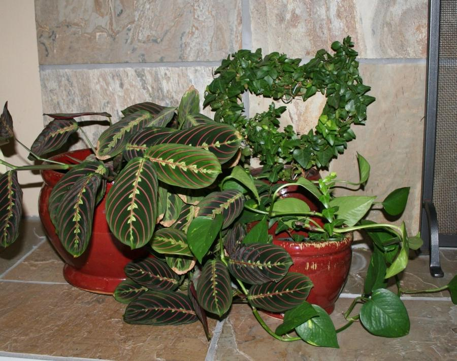 House plant names and photos - Names of indoor plants ...