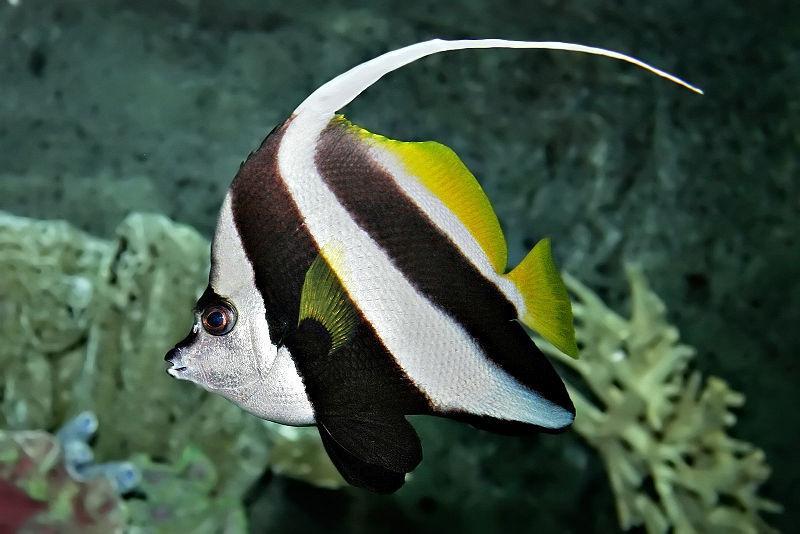 Indian Aquarium Fishes Photos