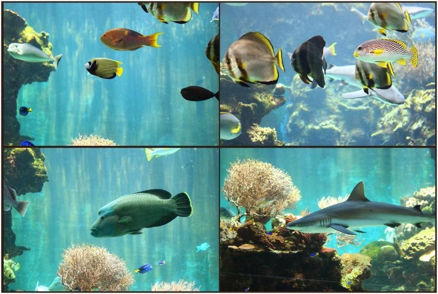 Noumea aquarium photos for Aquarium bocal
