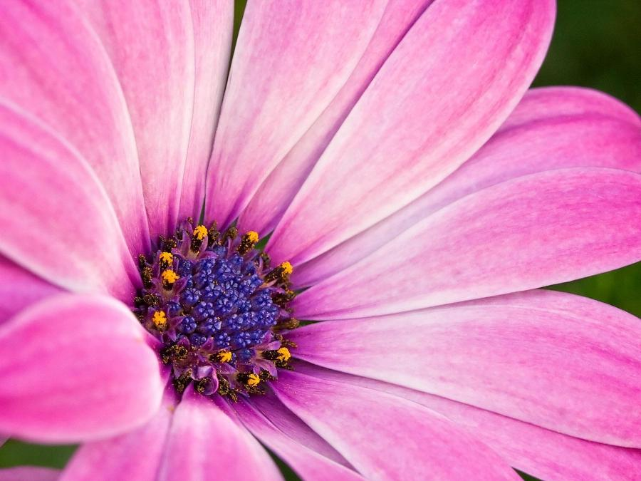 Best Flowers For Macro Photography