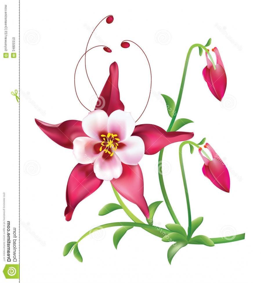 Columbine flower photo red columbine flower izmirmasajfo