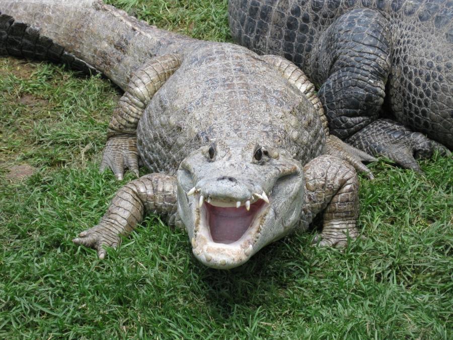 Reptile Gardens Photos