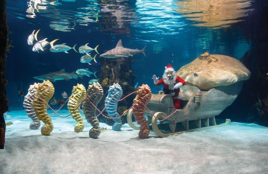 Newport Ky Aquarium Photos