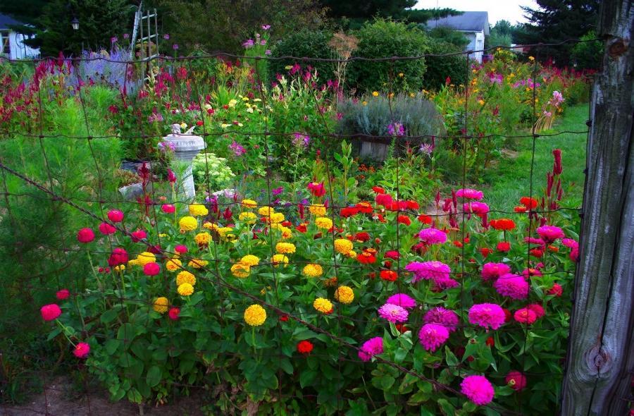Garden scenery photos for Under the garden moon