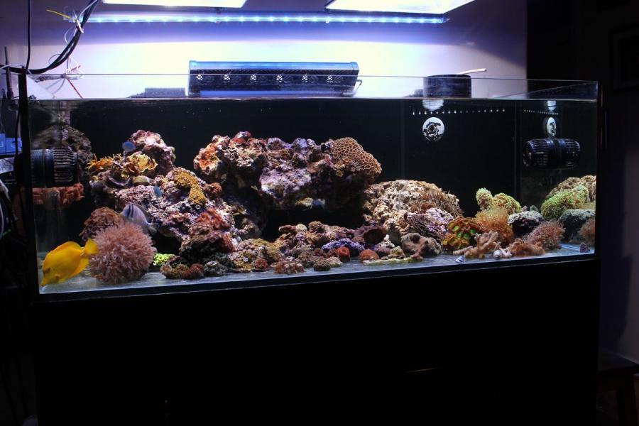 100 gallon fish tank malaysia 100 gallon fish tank kit for 100 gallon fish tank with stand