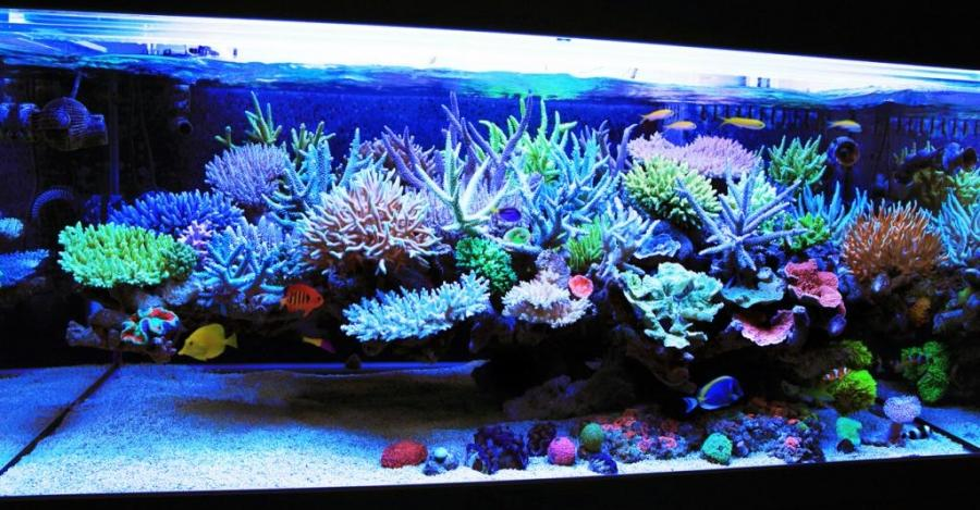 When we first happen upon a reef aquarium in pictures or real...