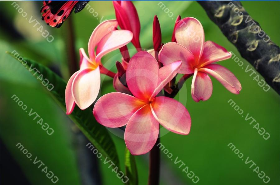 Large Image: Tropical Flowers
