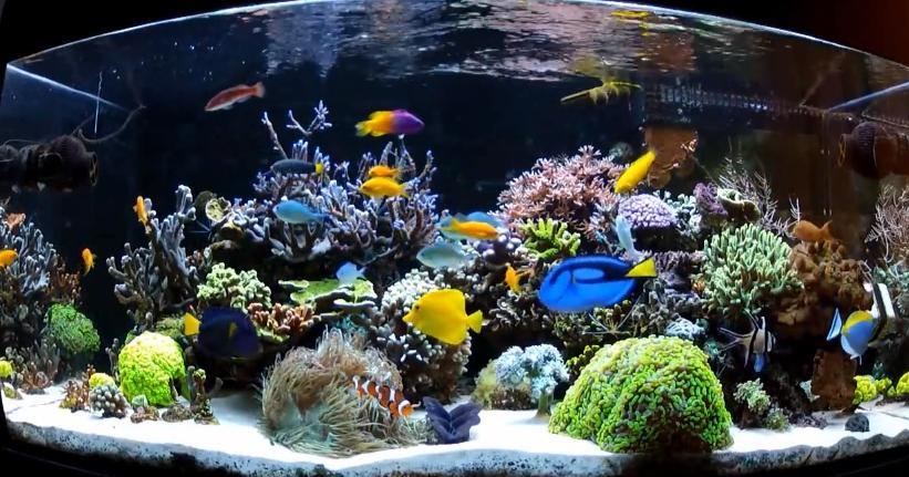 Saltwater aquarium photos for Beginner fish tank