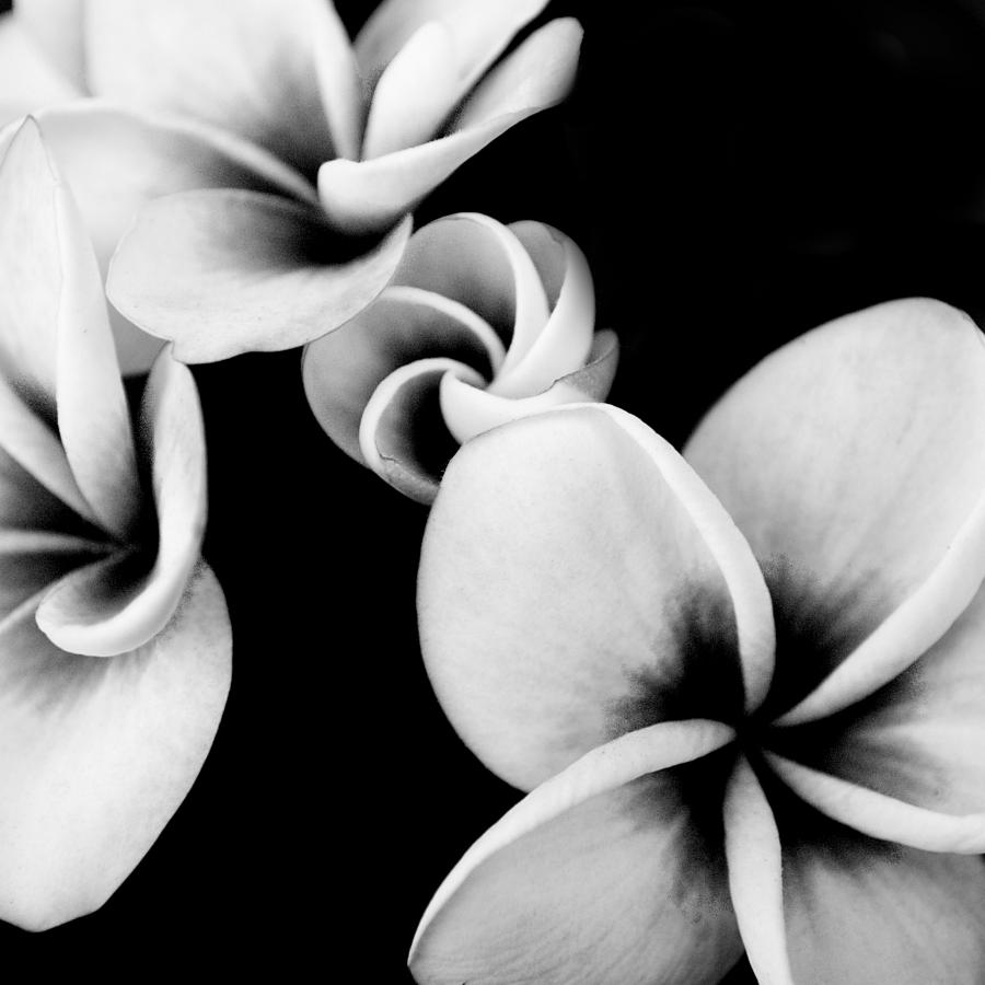 fantastic black and white photos flowers