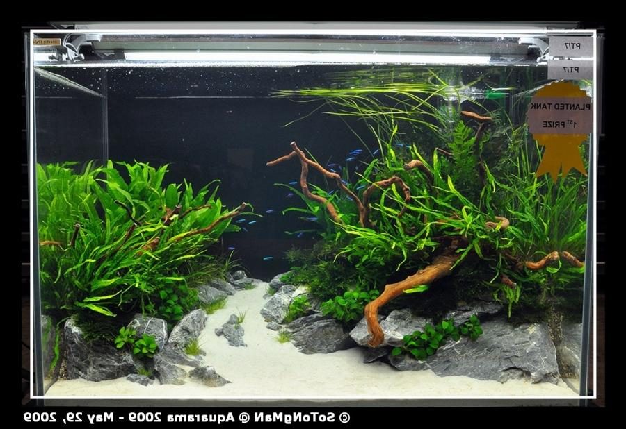 Planted tank competition at Aquarama 2009 - Arofanatics Fish... source