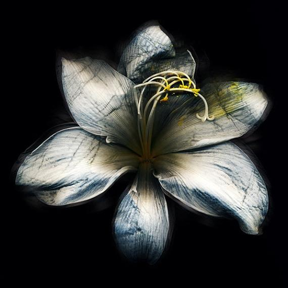 ... flower art by valentina 9 Beautiful Flower Photographs By...
