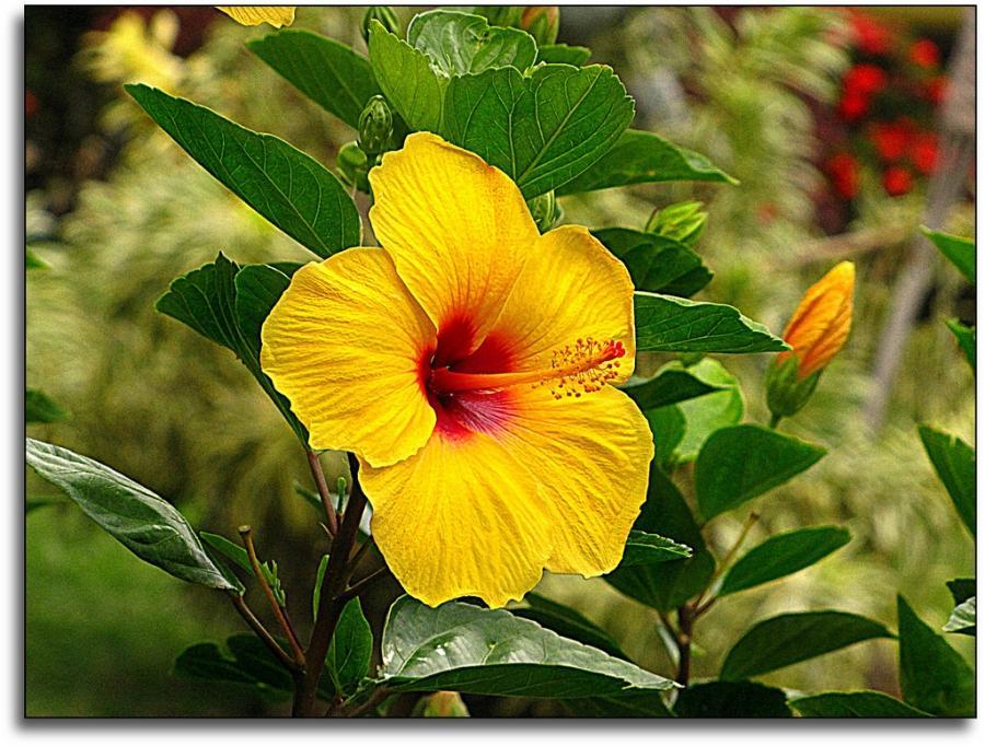 Names And Photos Of Hawaiian Flowers