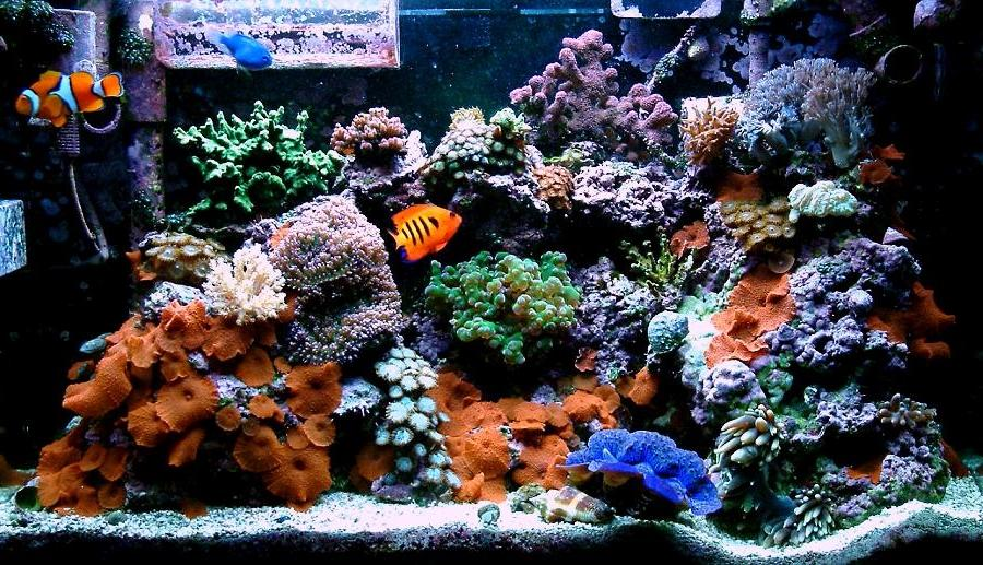 saltwater aquarium tank kits