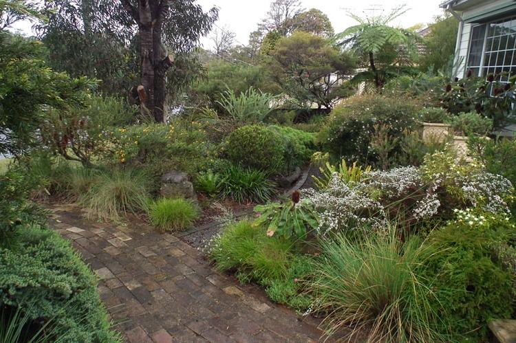 Photos of native gardens for Australian native garden design ideas
