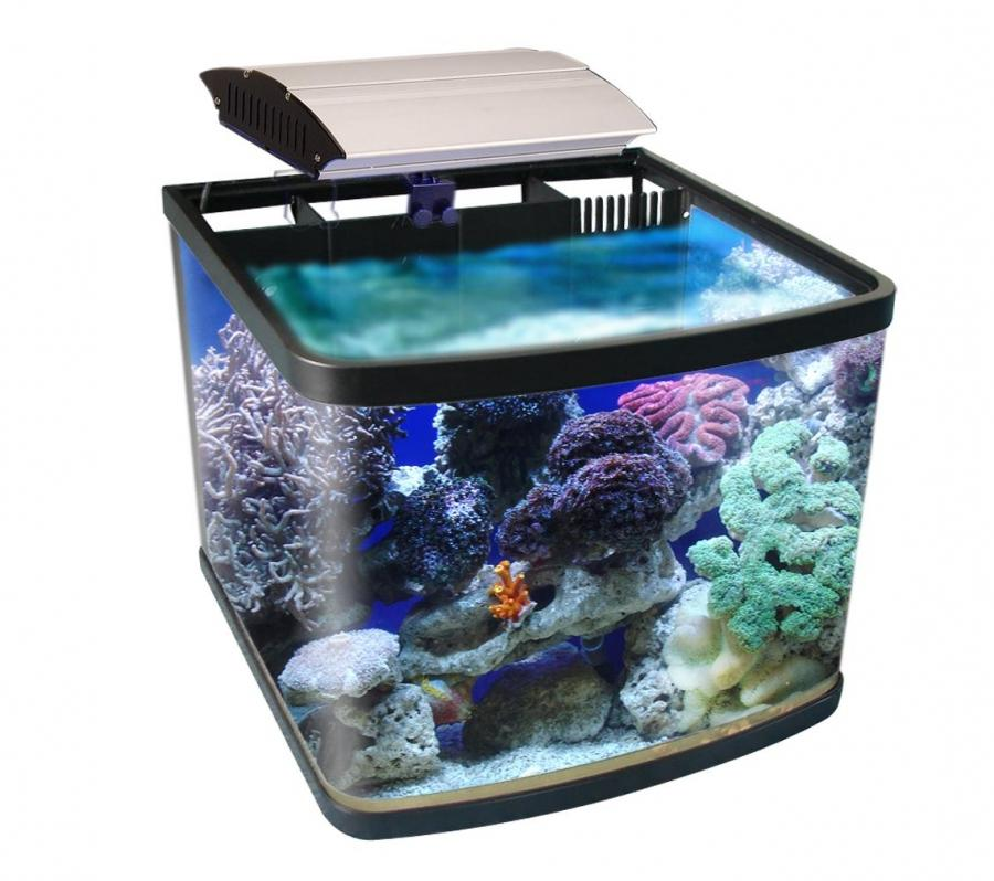 Reef aquarium photos for sale for Saltwater fish tank for sale