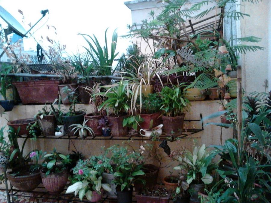 Photos Of Terrace Garden