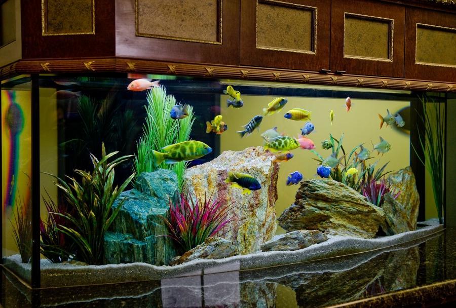 Beautiful freshwater fish aquarium